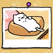 Tubbs on a cushion