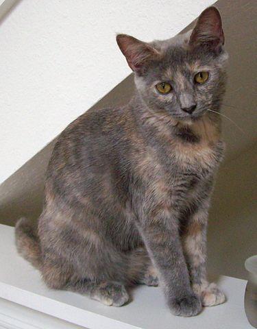 Http Nekoatsume Wikia Com Wiki Rare Cats Guide