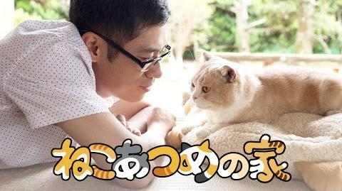 Neko Atsume no Ie Teaser