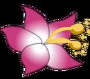 Nekodancer Wiki