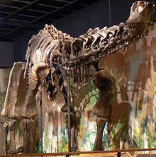 238px-Haplocanthosaurus delfsi