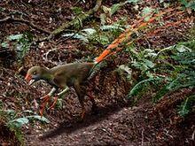 240px-Epidexipteryx NT
