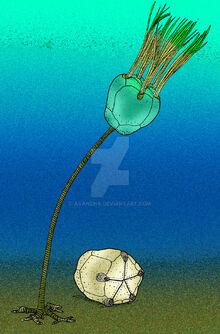 Indoblastus granulatus by avancna-d1zhrao