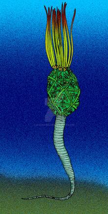 Mimocystites azaisi by avancna-d208vxs