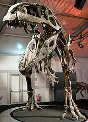 Giganotosaurus carolinii DSC 2950