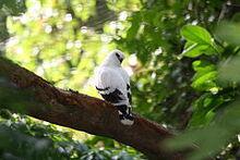 White Hawk 2 2495417957