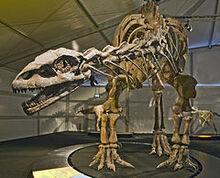 Lessemsaurus Senckenberg