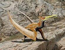 Ningchengopterus liuae