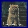 Avatar-PT5-Crookshanks