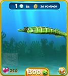 Green Trumpetfish
