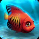 Fish rare angelfish flame