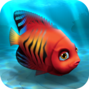 Fish rare angelfish flame