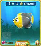 Silver Bicolor Angelfish
