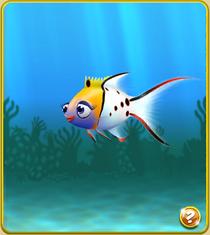 Epic Lyretail Hogfish