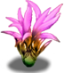 UI VIT Rare Plants