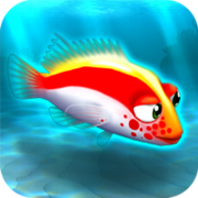 Fish rare hawkfish red
