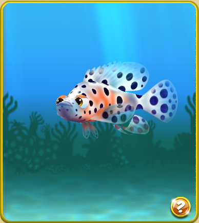 Panther Grouper | Panther Grouper Nemo S Reef Wiki Fandom Powered By Wikia
