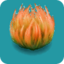 ORN Saffron Java Moss