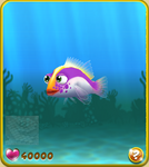 Violet Hawkfish