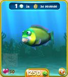 Green Parrotfish