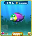 Violet Parrotfish