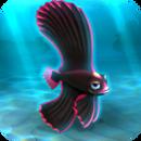 FISHR Pink Dusky Batfish