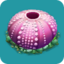 SPC Urchin's Shell