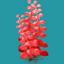 ORN Red Sea Blossom
