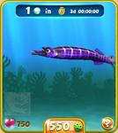 Violet Trumpetfish