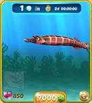 Red Trumpetfish