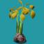 ORN Brown Mangrove Propagule