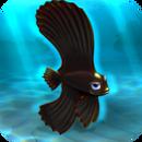 FISHR Black Dusky Batfish