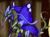 Flutterdrake Salvia