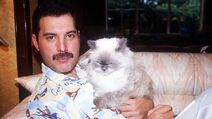 38121d43-6a03-4d67-bae6-54b7dfadddd7-freddie-with-cat