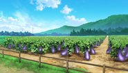 Eggplant Fields