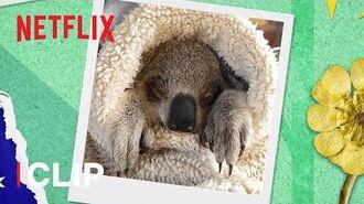 Helping Baby Chompy Get Better! 🐨 Izzy's Koala World (Season 1) Netflix Jr