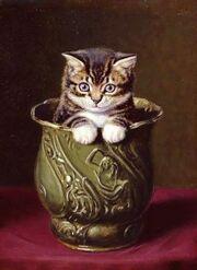 Decanter of endless kittens