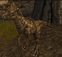 Charcoal Dustrunner Raptor