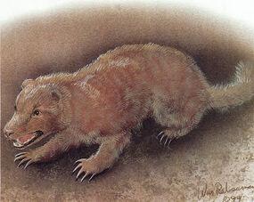 Earth hound, William Rebsamen
