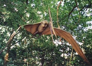 File:Pteranodon in flight, Dr Karl Shuker.jpg