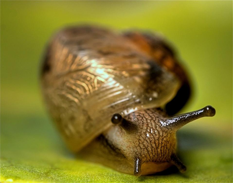 image gastropod jpg new cryptozoology wiki fandom powered by wikia