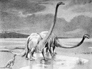 Diplodocus19051