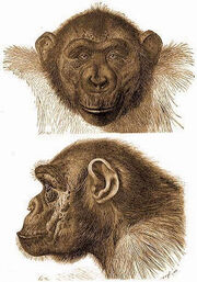 Koolookamba Mafuka, 2 views of face and head