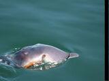 South African Marine Intertebrate