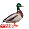 TheDuck inc.