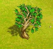 EucalyptusEmpty