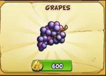 Grapes new