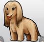 Afghanhound