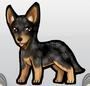 Australiancattledog
