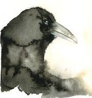 Crow head ink